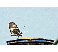 Butterfly and Nectar Photographic Print