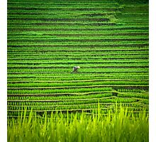 In the green field Photographic Print