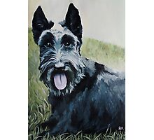 Tilly Dog  Photographic Print