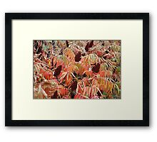 A fence of nature. Framed Print