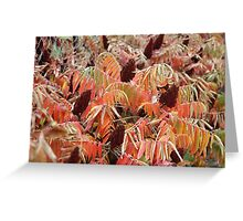 A fence of nature. Greeting Card