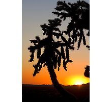 Cholla at Sunset Photographic Print
