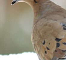 Mourning dove in the snow Sticker