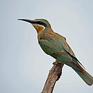 Blue cheeked bee eater by Explorations Africa Dan MacKenzie