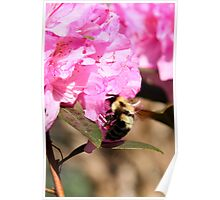 Beeing There - Rhododendron Poster