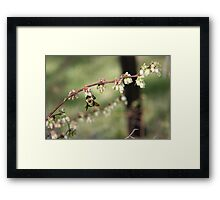 Beeing There - Blueberries Framed Print