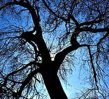 backlit tree by Majameath