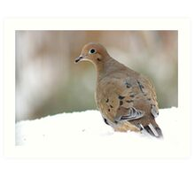 Mourning dove in the snow Art Print