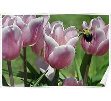 Bee Still Poster