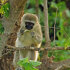 Chamelion snack by Explorations Africa Dan MacKenzie