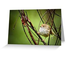 Brown Thornbill Greeting Card