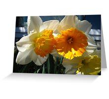 Glorious Daffodils Greeting Card