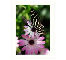 Zebra Longwing on a Daisy  Art Print
