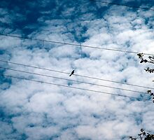 Bird on a Wire by Rebecca Dru