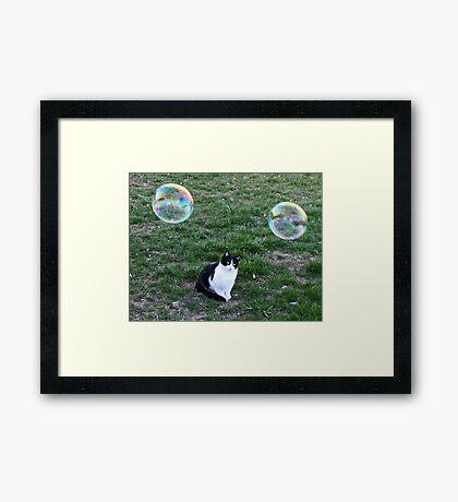 That's Not A Bird! Framed Print