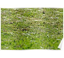 Filaments on an autumn lawn 1 Poster
