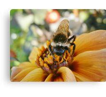 Bee My Honey Canvas Print