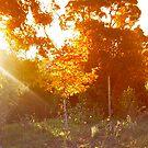 Autumn Sun by DEB CAMERON