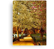 Springtime in Boston Canvas Print