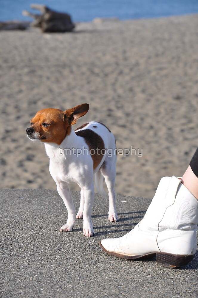 Alki Beach Pup by tmtphotography