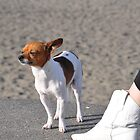 Alki Beach Pup by tmtphotography