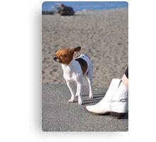 Alki Beach Pup Canvas Print