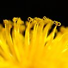 Yellow curls by Javimage