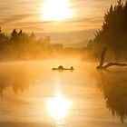 Morning Mist - Canberra Lake by Barry Armstead