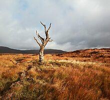 Glencoe landscape by Grant Glendinning