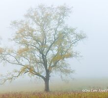A Foggy Autumn Morning in the Smokies by Kellie Sharpe