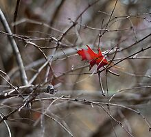Autumn Entrapped by Vince Russell