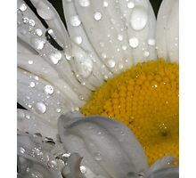 Spring's Morning Dew.............. Happy Easter to all... Photographic Print
