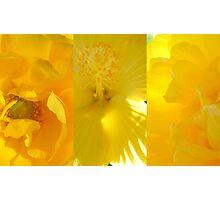 Sending You Sunshine... Photographic Print