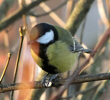 The Great Tit by ArtOfE