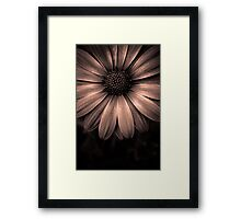 Discovering perfection in every tiny detail.  Framed Print