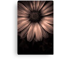 Discovering perfection in every tiny detail.  Canvas Print
