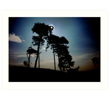catchlight thru treescape Bangor Art Print