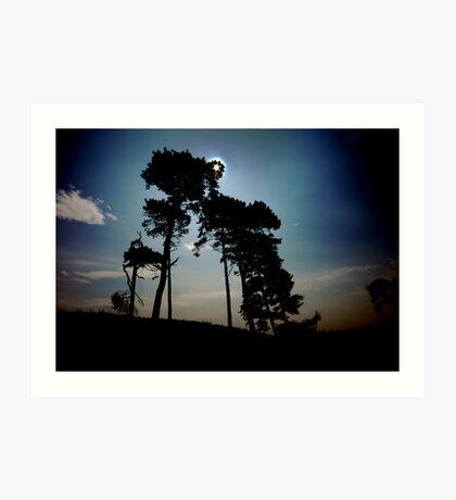 catchlight thru treescape Bangor Art Print