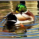 Mr. Mallard  by Rose Gallik