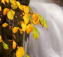 Autumn Falls Sticker