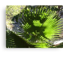 Palm Tree - Palma Canvas Print