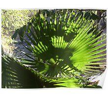 Palm Tree - Palma Poster