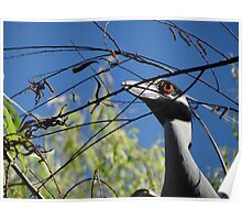 I Found Another Branch For Our Nest - Encontre Otro Cepo Para Nuestro Nido Poster