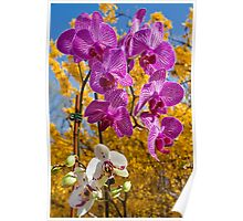 Orchids. Poster