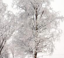 Winter Trees Sticker