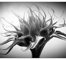 Last Days of the Sunflower by Karl Willson