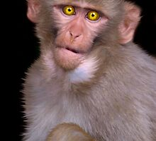 Young Rhesus Macaque Paintover Effect by SerenaB