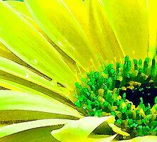 Yellow by Karl Willson