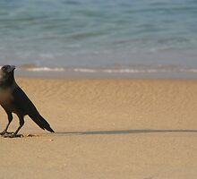Crow on the Sand Varkalala by SerenaB