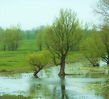in between the dikes by shireengol